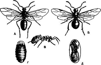 фото водные насекомые