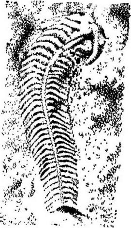 Эволюция органов дыхания - Биология - 11 класс | 470x271
