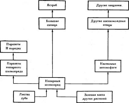 Примеры пищевых цепей в