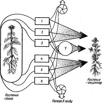 Схема аллелопатических влияний