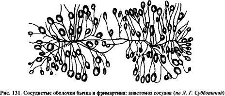 препараты от внутренних паразитов для человека