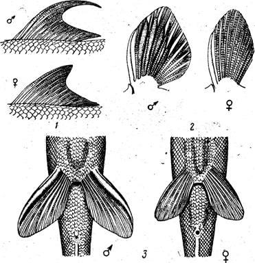 Вторичнополовые признаки у рыб