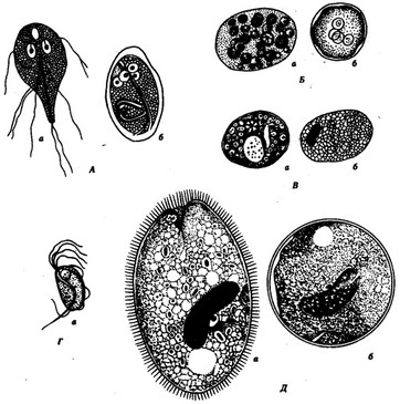 паразиты обитающие в организме человека