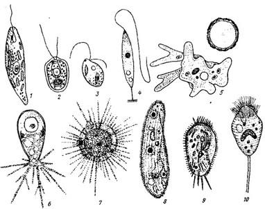 лечение от простейших паразитов